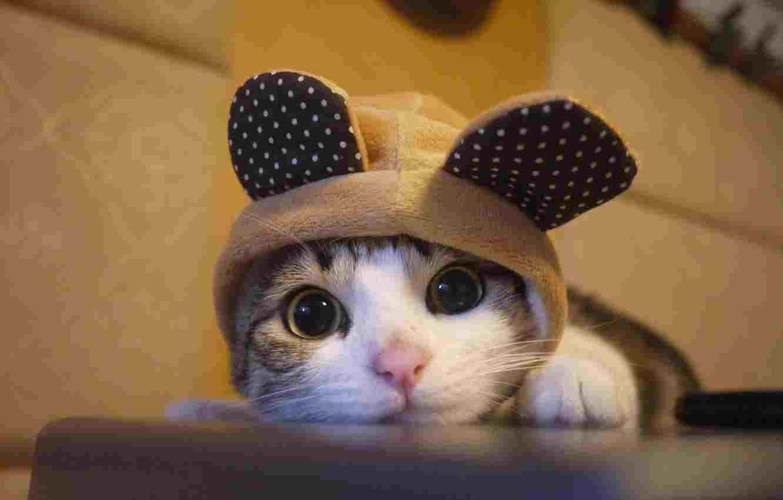چگونه ترس از گربه را از بین ببریم | فوبیای گربه